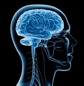 La feuille de Ginkgo Biloba bio, excellente pour la fonction cognitives du cerveau